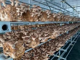 菌床シイタケ リックス ソーラーシェリング