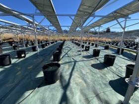 ソーラーシェアリング リックス ブルーベリー