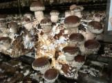 太陽光 菌床きのこ