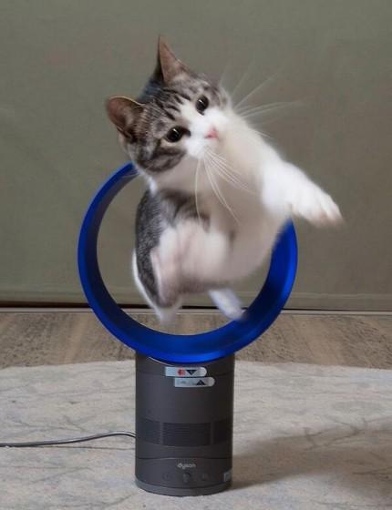 cat_0091